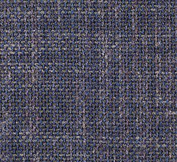 Harlequin Otomis Blueberry